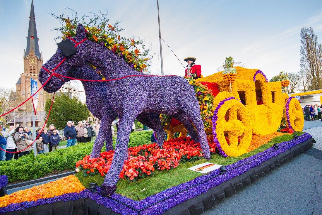 Фото выставок цветов голландии 7