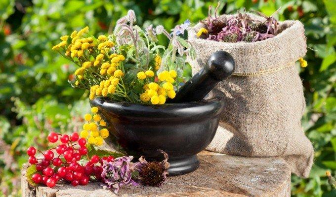 самые эффективные травы для похудения отзывы