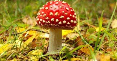 грибами