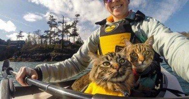 коти-мандрівники