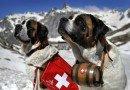Собаки-спастели