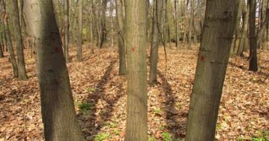 лесов