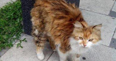 кошка Чита