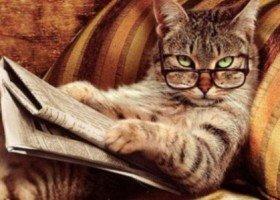 кошки умные
