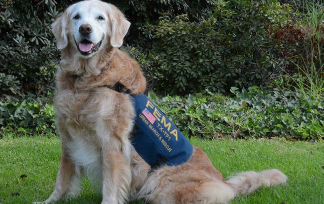 собака которая спасала людей 11 сентября