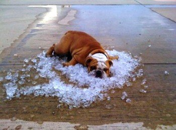 спастись от жари