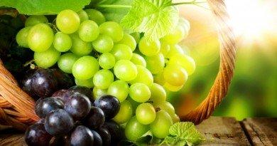 винограду
