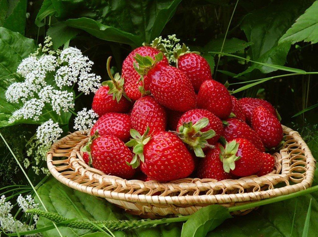 как сода помогает похудеть ягоди