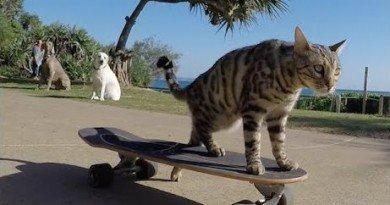 кот на скейтборде