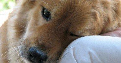 В Днепре лечат собаку с «человеческим» диагнозом (Фото)