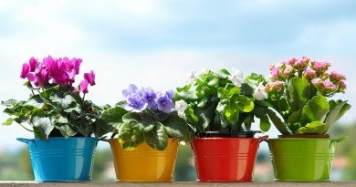 Стало известно о пользе и вреде домашних растений