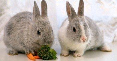 кроликами