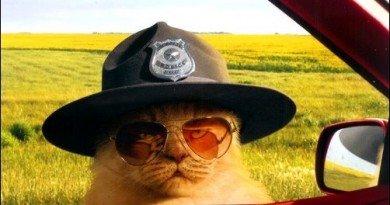 псевдо-поліцейські