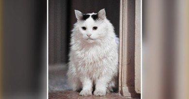 кот-долгожитель