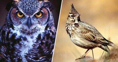 сова-vs-жаворонок