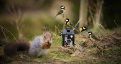 фотоаппарат с животными