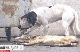 безпритульні тварини