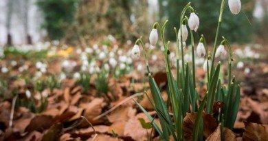 листья_весна