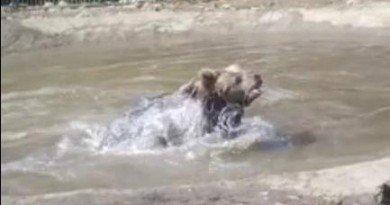 медведица Ляля