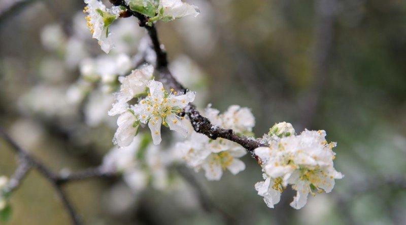 погода_заморозки весной