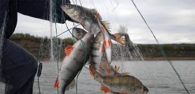 рыбные браконьеры