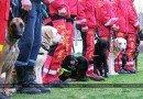 собаки-спасатели_Павлоград