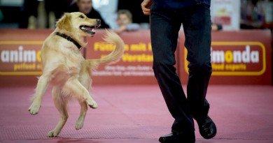 танцы с собаками