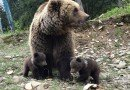 Нацпарк Синевир_медвежата