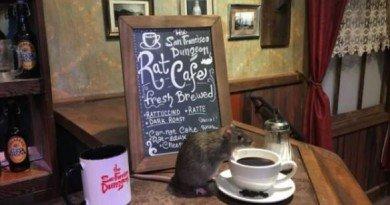 кофейня с крысами