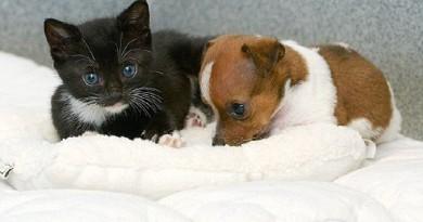 котята и щенки
