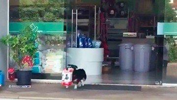 собака, покупающая себе корм