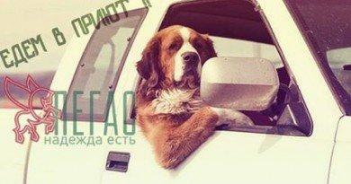 собаки_Пегас