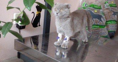 викрадення кошеня