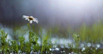 погода_дождь