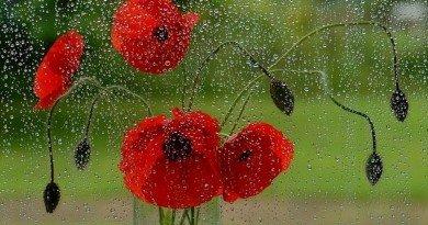 дождь_погода