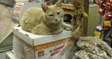 кіт Стаббс