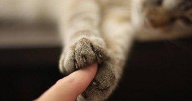 лапа кошки
