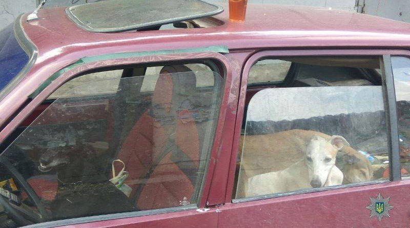собаки біля ринку у Дніпрі