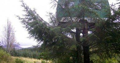 фургон на дереве