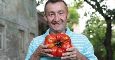 гигантский помидор_Львов
