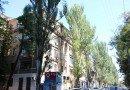 дерева у Дніпрі