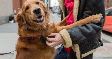 собака-обнимака