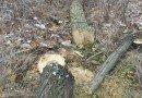 вирубка лісосмуги