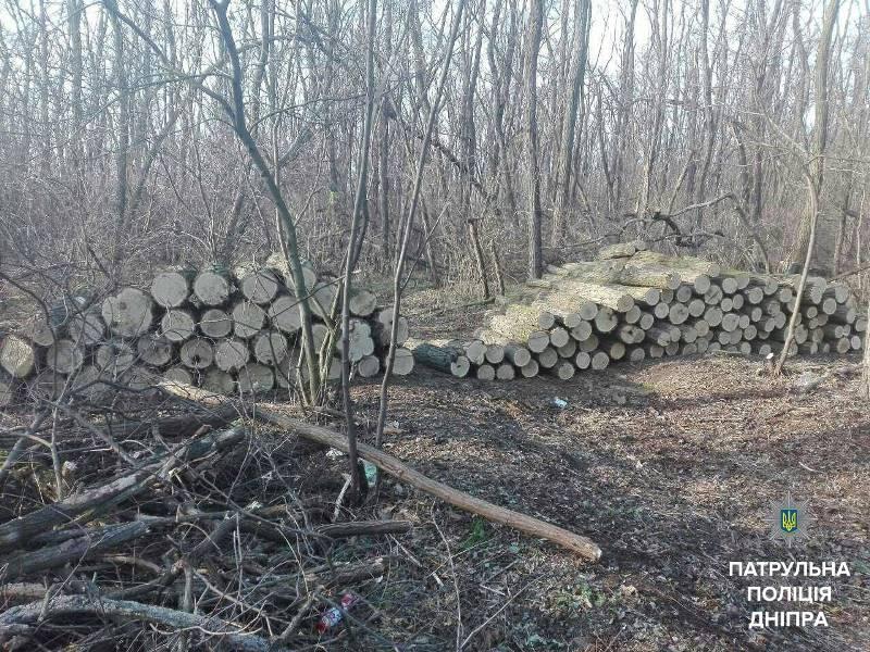 дерева у заповідній зоні