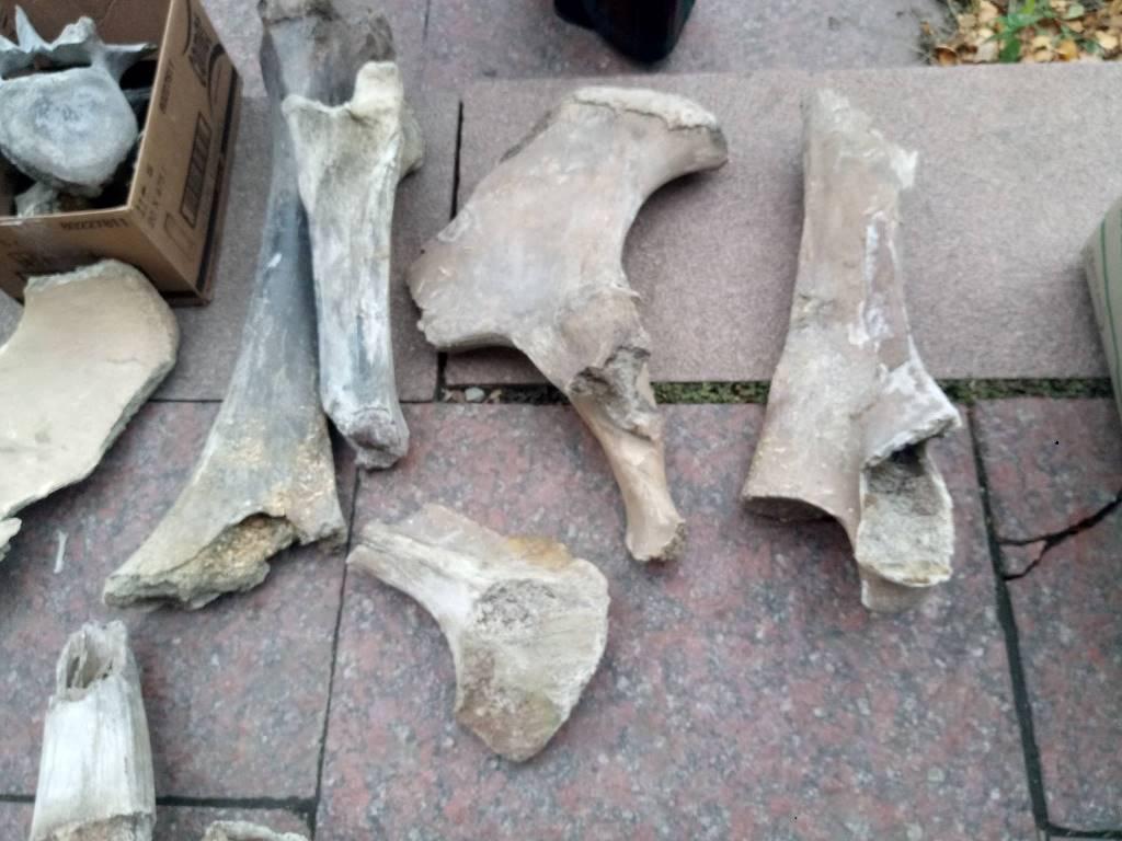 експонати_кістки