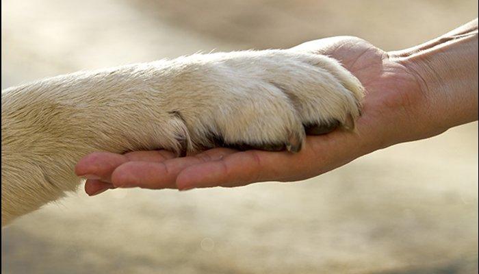 лапа собаки