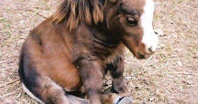 лошадка-дюймовочка