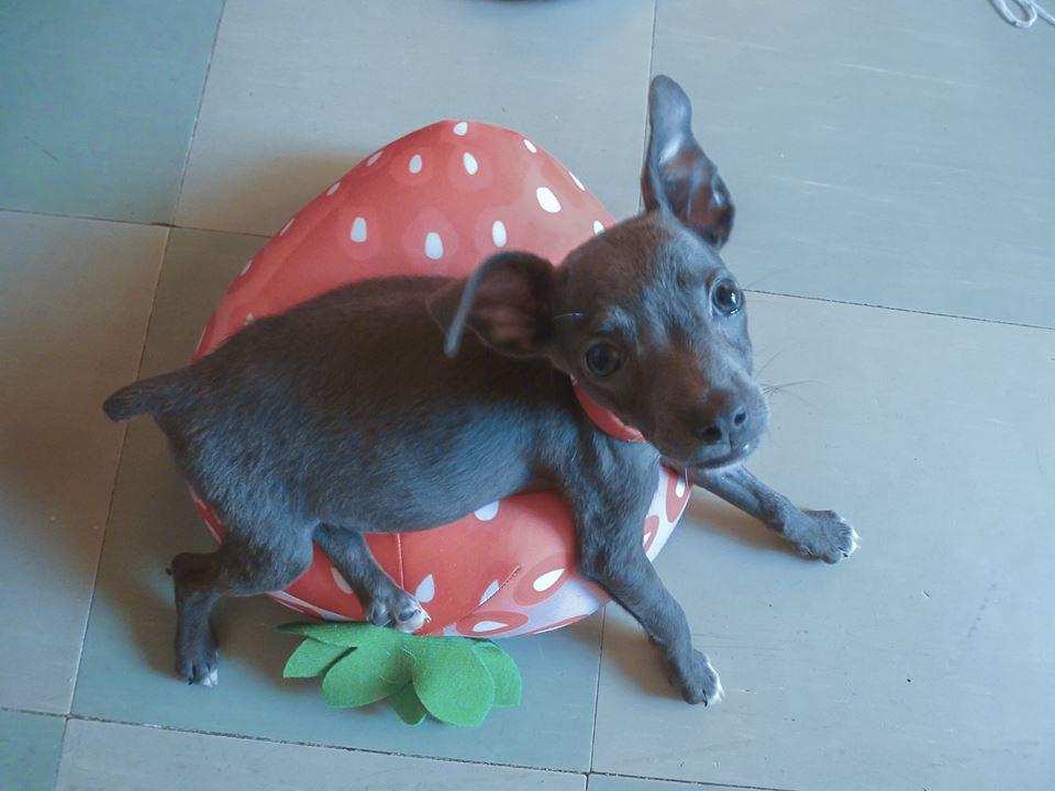 собака Ария