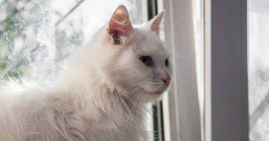 Белочка_кошка