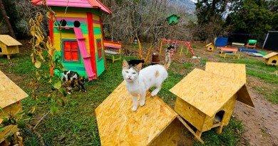 деревня для кошек